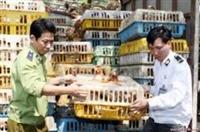 Thủ tục cần thiết để nhập khẩu gia súc sống