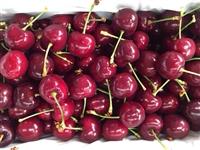 Thủ tục nhập khẩu cherry từ Úc về Việt Nam
