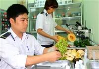 Thủ tục kiểm dịch thực vật nhập khẩu