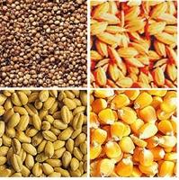 Thủ tục nhập khẩu nông sản sấy khô