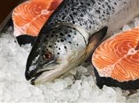 Thủ tục nhập khẩu cá hồi