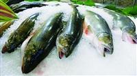 Thủ tục và thuế nhập khẩu cá đông lạnh