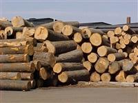 Thủ tục nhập khẩu gỗ tròn, gỗ xẻ có nguồn gốc từ Campuchia